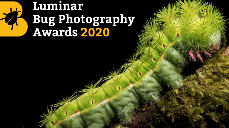Luminar Bug Photography Awards