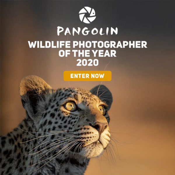Pangolin Wildlife Photographer of the Year