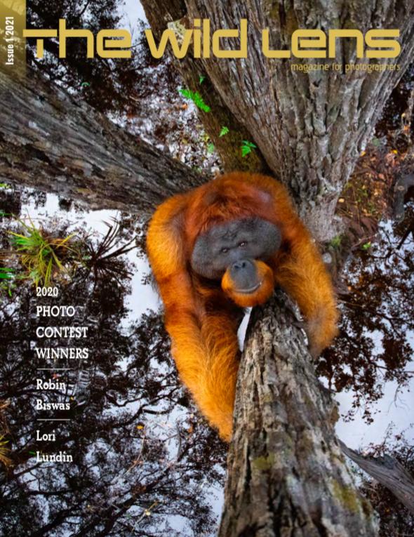Wild Lens Magazine Photographer of the Year